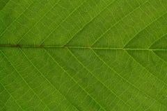 Σύσταση ενός πράσινου φύλλου ως υπόβαθρο στοκ εικόνες