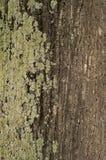 Σύσταση ενός ραγισμένου τραχιού φλοιού δέντρων για το γραφικό σχέδιο Στοκ φωτογραφία με δικαίωμα ελεύθερης χρήσης
