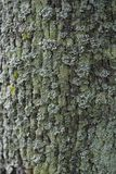 Σύσταση ενός φλοιού ενός δέντρου, υπόβαθρο Στοκ Εικόνες