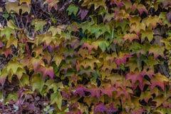 Σύσταση λεπτομέρειας φύλλων φθινοπώρου στοκ φωτογραφίες με δικαίωμα ελεύθερης χρήσης