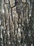 Σύσταση δερμάτων δέντρων Στοκ Φωτογραφίες