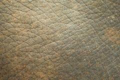 Σύσταση δερμάτων ελεφάντων Στοκ φωτογραφίες με δικαίωμα ελεύθερης χρήσης