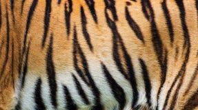 Σύσταση δερμάτων τιγρών Στοκ Εικόνα