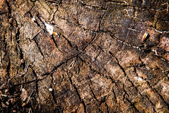 Σύσταση κορμών δέντρων Στοκ φωτογραφία με δικαίωμα ελεύθερης χρήσης