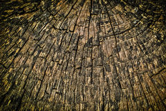 Σύσταση κολοβωμάτων δέντρων διατομής στοκ φωτογραφία με δικαίωμα ελεύθερης χρήσης