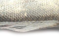 Σύσταση κλιμάκων ψαριών grunge Στοκ εικόνες με δικαίωμα ελεύθερης χρήσης