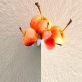 σύσταση μήλων Στοκ εικόνες με δικαίωμα ελεύθερης χρήσης