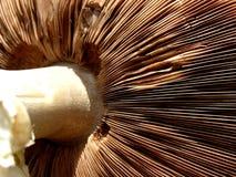 σύσταση μανιταριών ανασκόπ&et Στοκ Φωτογραφίες