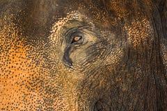 σύσταση ματιών και δερμάτων ελεφάντων ` s Στοκ Φωτογραφία