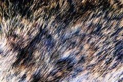 Σύσταση μαλλιού Στοκ Φωτογραφία