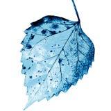 Σύσταση με τα σάπια φύλλα με τις ίνες στοκ φωτογραφίες