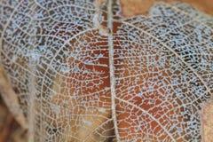 Σύσταση με τα σάπια φύλλα με τις ίνες Στοκ Εικόνες