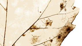 Σύσταση με τα σάπια φύλλα στοκ φωτογραφίες