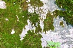 Σύσταση με το πράσινο βρύο στοκ φωτογραφία με δικαίωμα ελεύθερης χρήσης