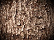 σύσταση ξύλινη Στοκ Φωτογραφίες