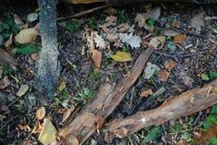 Σύσταση ξύλου Στοκ φωτογραφία με δικαίωμα ελεύθερης χρήσης