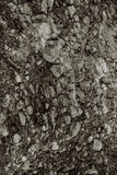 σύσταση πετρών βράχου βρύου Στοκ φωτογραφία με δικαίωμα ελεύθερης χρήσης