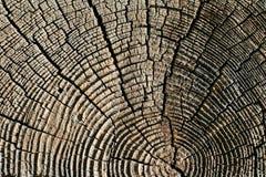 σύσταση πεύκων ξύλινη Στοκ Εικόνες