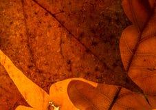 σύσταση στοιχείων σχεδίου φθινοπώρου Στοκ Φωτογραφία