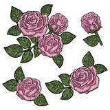 Σύσταση σχεδίων κεντητικής, ταπετσαρία, υπόβαθρο με τα όμορφα ρόδινα τριαντάφυλλα Διανυσματική floral διακόσμηση στο μαύρο υπόβαθ Στοκ Φωτογραφίες