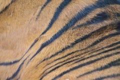 Σύσταση της ζωηρόχρωμης επιφάνειας γουνών δερμάτων τιγρών Στοκ Εικόνες
