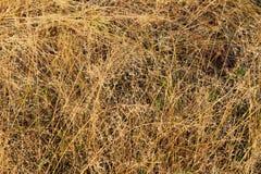 Σύσταση της κίτρινης τοπ άποψης χλόης στοκ φωτογραφία με δικαίωμα ελεύθερης χρήσης