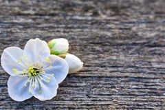 Σύσταση της περίληψης λουλουδιών τοίχων πετρών παλαιάς στοκ εικόνες