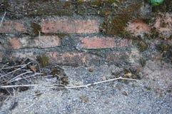 Σύσταση της σύστασης της λειχήνας στο τούβλο Στοκ φωτογραφία με δικαίωμα ελεύθερης χρήσης