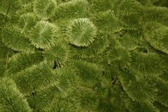 Σύσταση της τεχνητής πράσινης διακόσμησης δέντρων πεύκων ότι υπάρχουν πολλές λάμπες φωτός που λάμπουν και χρυσές και ασημένιες σφ στοκ φωτογραφίες