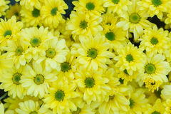 Σύσταση τοίχων λουλουδιών σχεδίων για το υπόβαθρο Στοκ Εικόνες