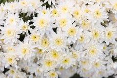 Σύσταση τοίχων λουλουδιών σχεδίων για το υπόβαθρο Στοκ εικόνα με δικαίωμα ελεύθερης χρήσης