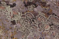 Σύσταση του βρύου, φόρμα στην πέτρα, υπόβαθρο φύσης στοκ εικόνα