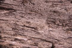 Σύσταση του δέντρου πεύκων Στοκ Εικόνα