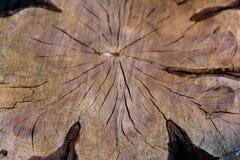 Σύσταση του κομμένου ξύλου δέντρων στοκ εικόνες
