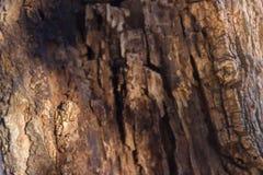 Σύσταση του κομμένου ξύλου δέντρων στοκ εικόνα
