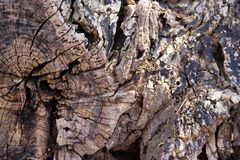 Σύσταση του κομμένου ξύλου δέντρων στοκ φωτογραφία με δικαίωμα ελεύθερης χρήσης