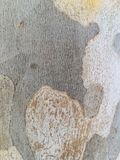 Σύσταση του κούτσουρου δέντρων Στοκ εικόνες με δικαίωμα ελεύθερης χρήσης
