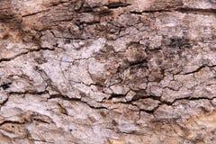 Σύσταση του ξύλου φλοιών Στοκ Εικόνες