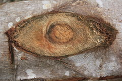 Σύσταση του ξύλου όπως ένα μάτι για το υπόβαθρο Στοκ εικόνες με δικαίωμα ελεύθερης χρήσης