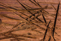 Σύσταση του ξύλου Στοκ εικόνες με δικαίωμα ελεύθερης χρήσης