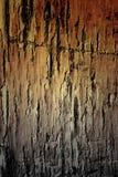 Σύσταση του παλαιού χαλασμένου δάσους πεύκων Στοκ εικόνα με δικαίωμα ελεύθερης χρήσης