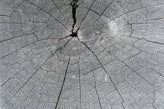 Σύσταση του παλαιού δέντρου περικοπών Στοκ εικόνες με δικαίωμα ελεύθερης χρήσης