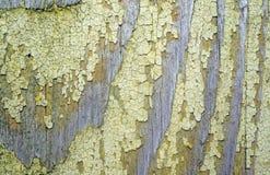Σύσταση του παλαιού ξύλου με τα υπόλοιπα της κίτρινης κινηματογράφησης σε πρώτο πλάνο χρωμάτων ως ΤΣΕ Στοκ Εικόνες