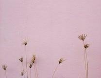 Σύσταση του τοίχου και των ξηρών λουλουδιών Στοκ Εικόνες