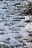 Σύσταση του φλοιού δέντρων σημύδων στοκ φωτογραφία με δικαίωμα ελεύθερης χρήσης