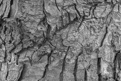 Σύσταση του φλοιού ενός δέντρου Στοκ Εικόνα