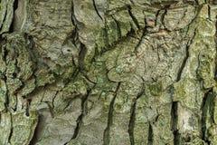 Σύσταση του φλοιού ενός δέντρου Στοκ Φωτογραφίες