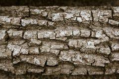 Σύσταση του φλοιού ενός ξηρού δέντρου στοκ φωτογραφία