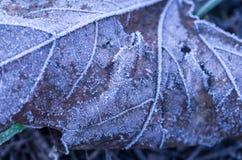 Σύσταση του φύλλου φθινοπώρου Ένα φύλλο φθινοπώρου ανακούφισης Κρύο πρωί Στοκ φωτογραφία με δικαίωμα ελεύθερης χρήσης