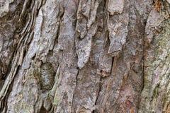 Σύσταση του φλοιού δέντρων Στοκ φωτογραφίες με δικαίωμα ελεύθερης χρήσης